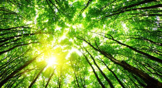 MC Девіс, Абдул Карім, Джадав Пайенг, екологія, Ернст Гетч, ліс, новини світу, Якуба Савадого