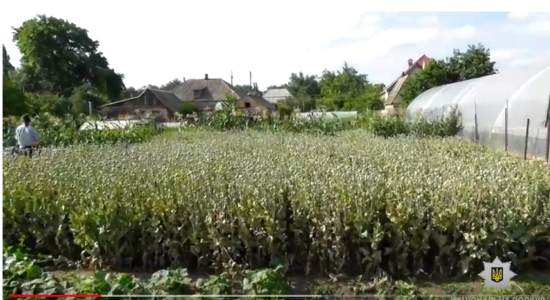 На Запоріжжі знайшли плантацію маку на 2 млн гривень