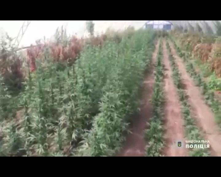 Запоріжжя Поліція знайшла наркоплантації на 4,5 млн грн