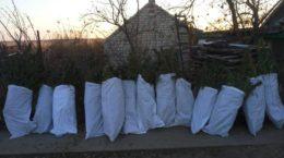 На Херсонщині знайшли плантацію коноплі на 2 млн грн