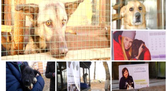 В Харькове презентовали благотворительный календарь, помогать бездомным животным