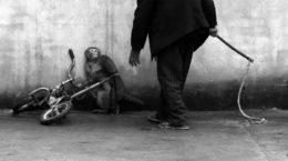 НІ тваринам у цирках - Мінприроди ініціювало заборону