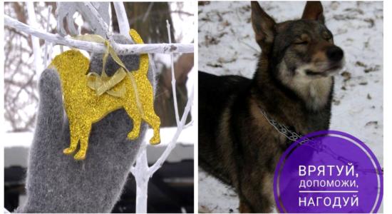 21 врятована тварина за 3 дні - харківські волонтери увічнюють подвиги містян на Дереві Життя