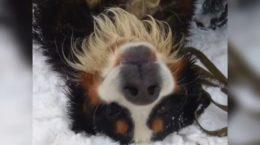 Історія Моцарта - врятованого в лісі собаку на Харківщині знайшли господарі