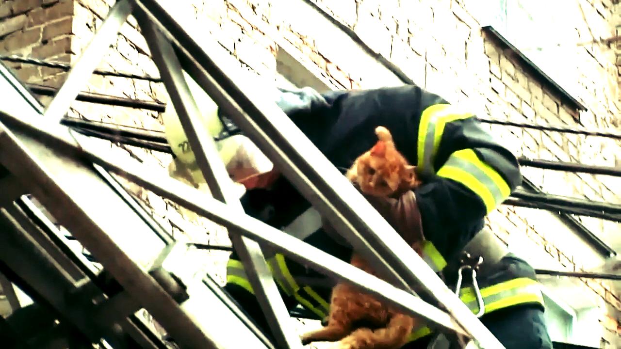 У Маріуполі бригада ДСНС врятувала кота