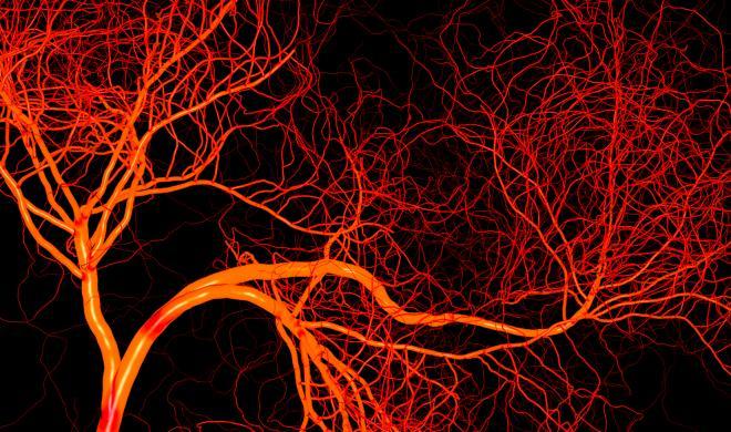 Вченим вперше вдалося виростити кровоносні судини людини в чашці Петрі