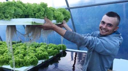 бизнес, Тернополь, зелень, теплицы, идеи для бизнеса