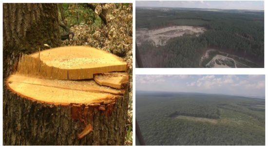 лес, вырубка, харків